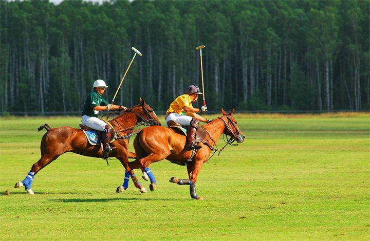 Спортивные чистокровки идеально подходят и для конного поло