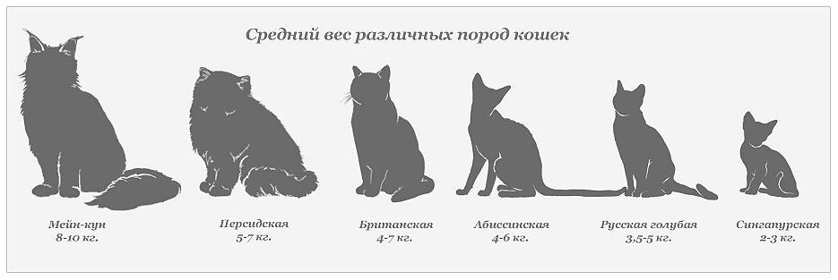 Средний вес кошек