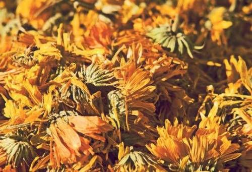 Сушеный одуванчик заготавливают отдельно от сена