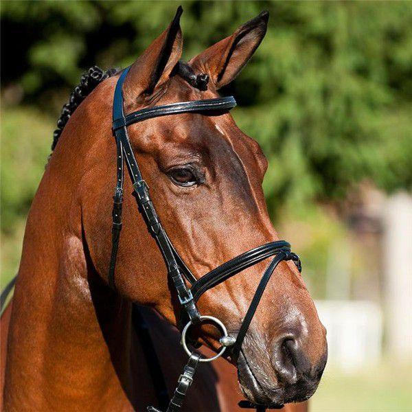 Удила подбираются с учётом каждой конкретной лошади