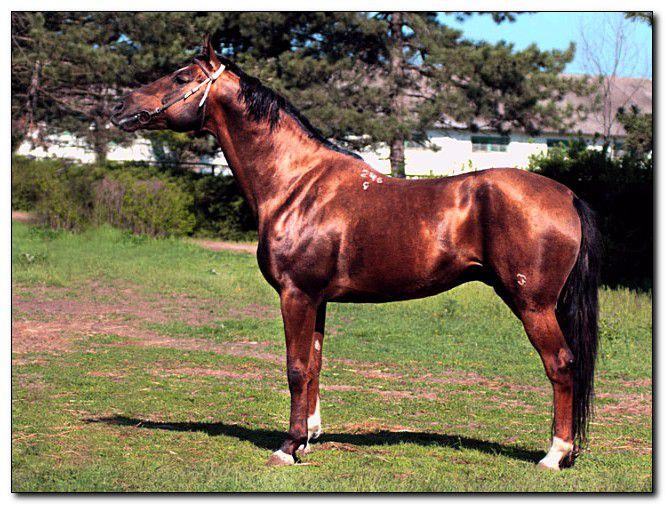 У каждой лошади есть клеймо