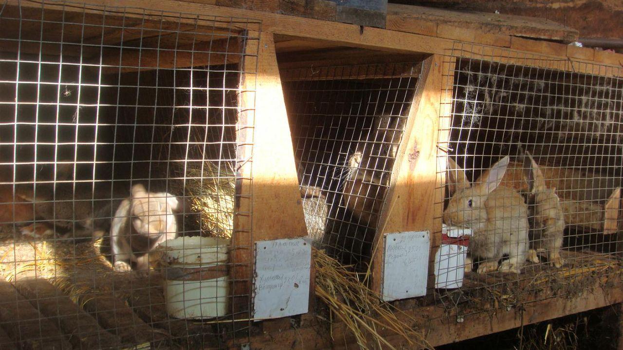 Обустройство клетки для сукрольной крольчихи