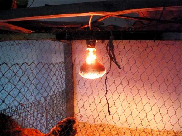 Инфракрасное освещение в курятнике