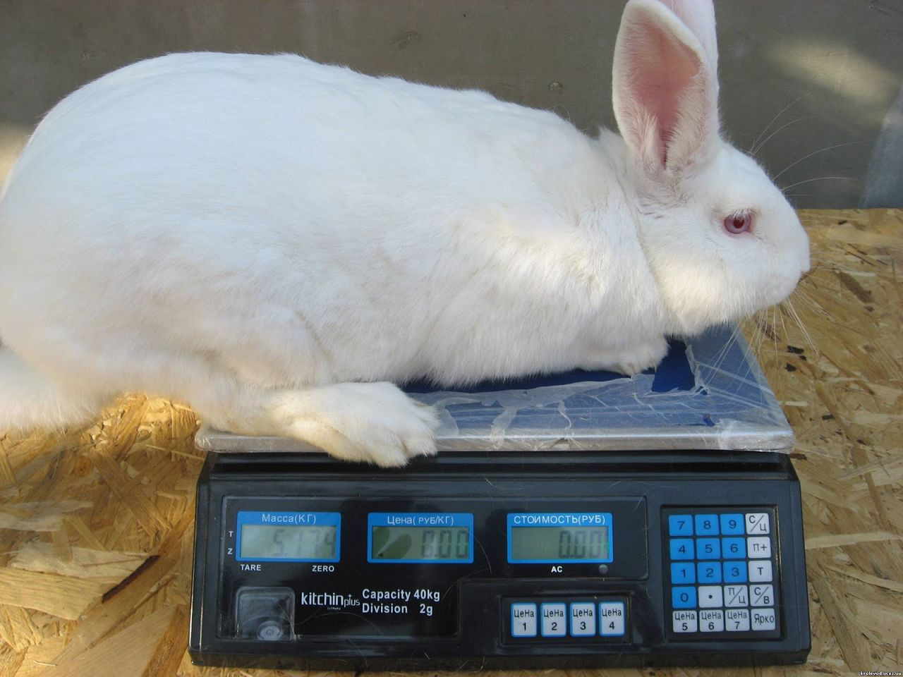 Проверка веса крольчихи