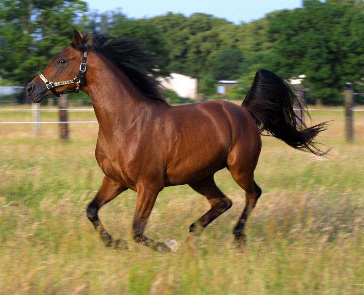 Выпас лошади