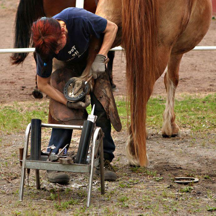 Подковка лошади