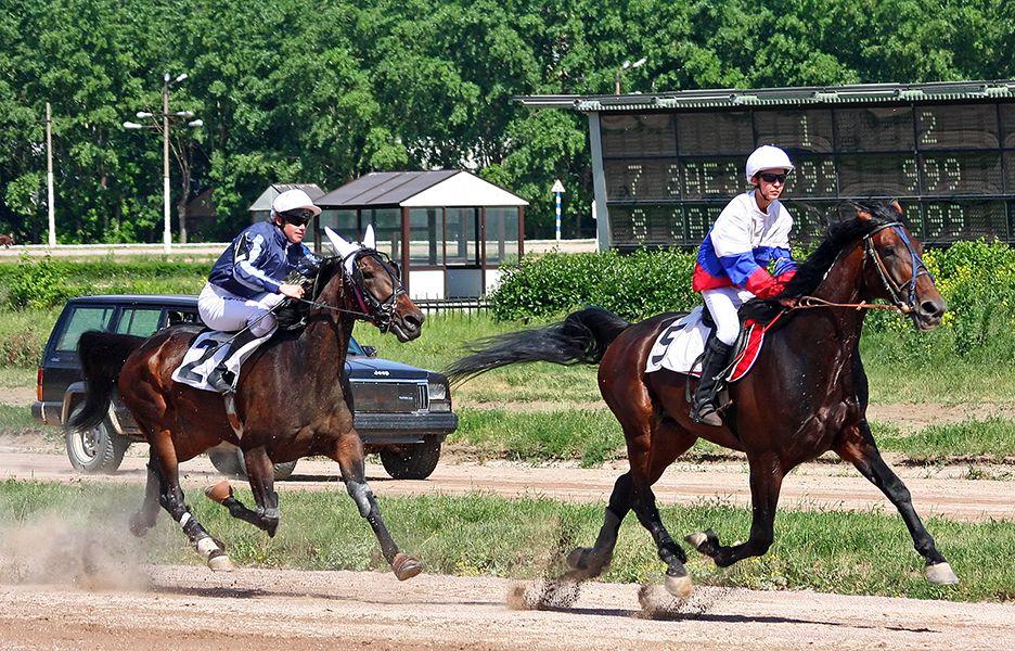 Арабская лошадь используется в конном спорте