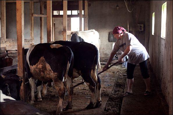 Человек может заразиться, ухаживая за больными животными