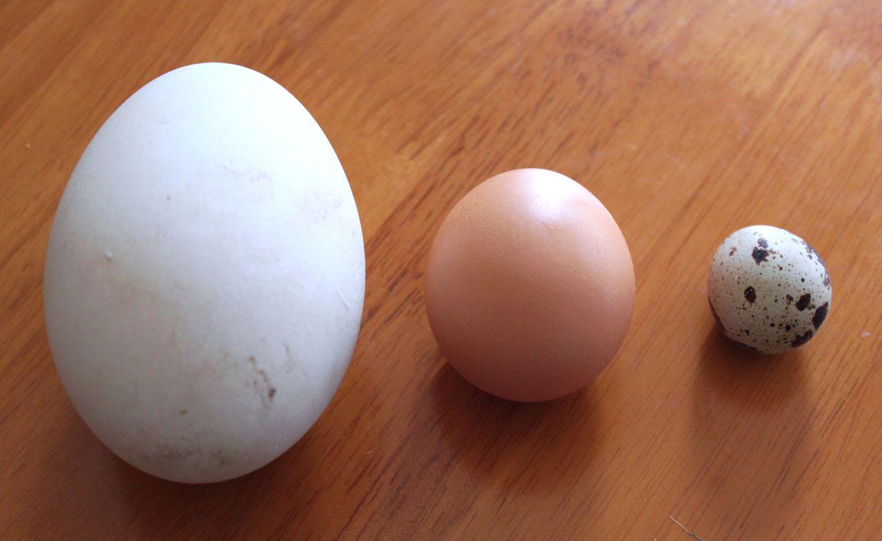 Яйца гуся, курицы и перепелки