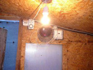 Яркий светильник в курятнике для аям цемани с реле времени