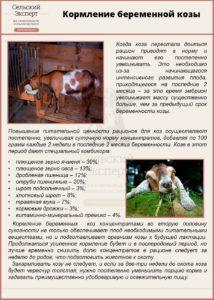 Кормление беременной козы