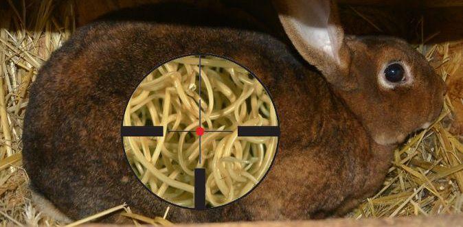 глисты у кроликов симптомы фото