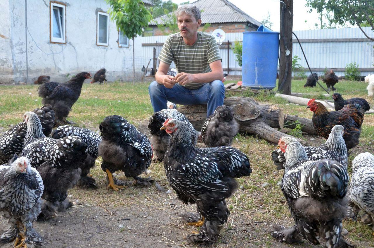 Гистомоноз может быстро распространиться среди всей домашней птицы