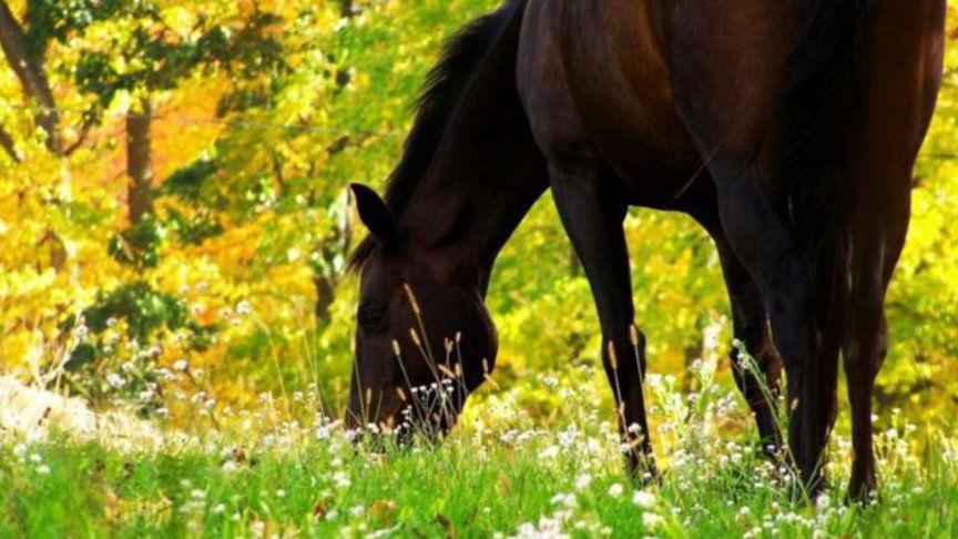 Правильное кормление лошадей - залог здоровья, а также полноценной жизни и активности животного
