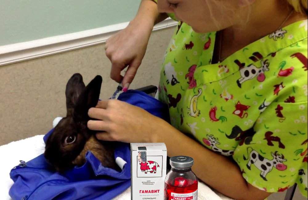 Гамавит для кроликов: как применять