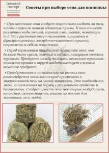 Советы при выборе сена для шиншилл