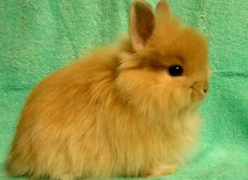 Уход за карликовыми кроликами правила и особенности