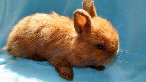 Содержать кроликов рекомендуется при комнатной температуре