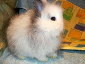 Кролика рекомендуется приобретать в возрасте от полутора месяцев