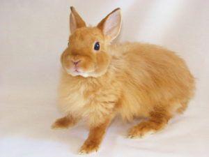 Карликовые кролики являются чистоплотными