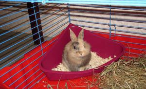 Лоток для карликового кролика