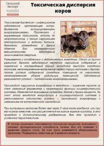 Токсическая дисперсия коров