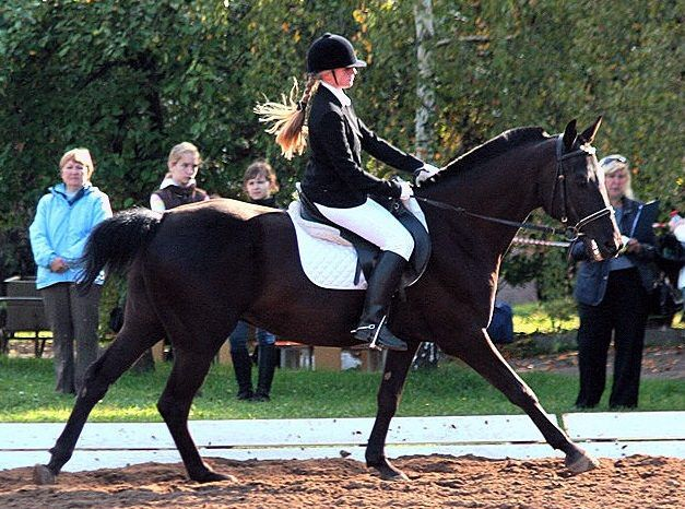 У голштинских лошадей, также как и у других пород, есть свои критерии выбраковки