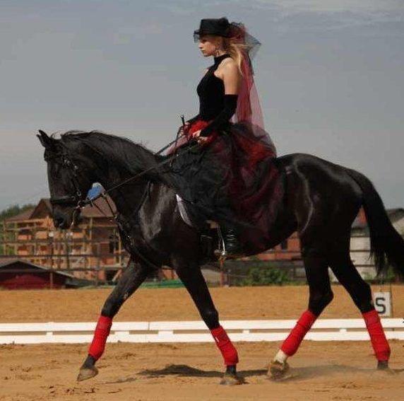 Для дамской езды седлать нужно хорошо обученную лошадь