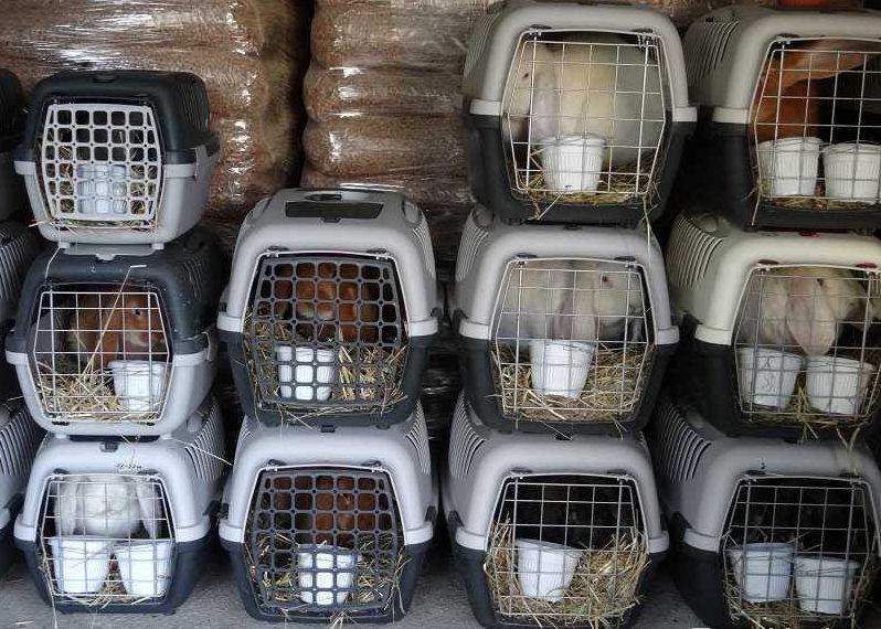 При перевозке кроликам также можно давать Чиктоник