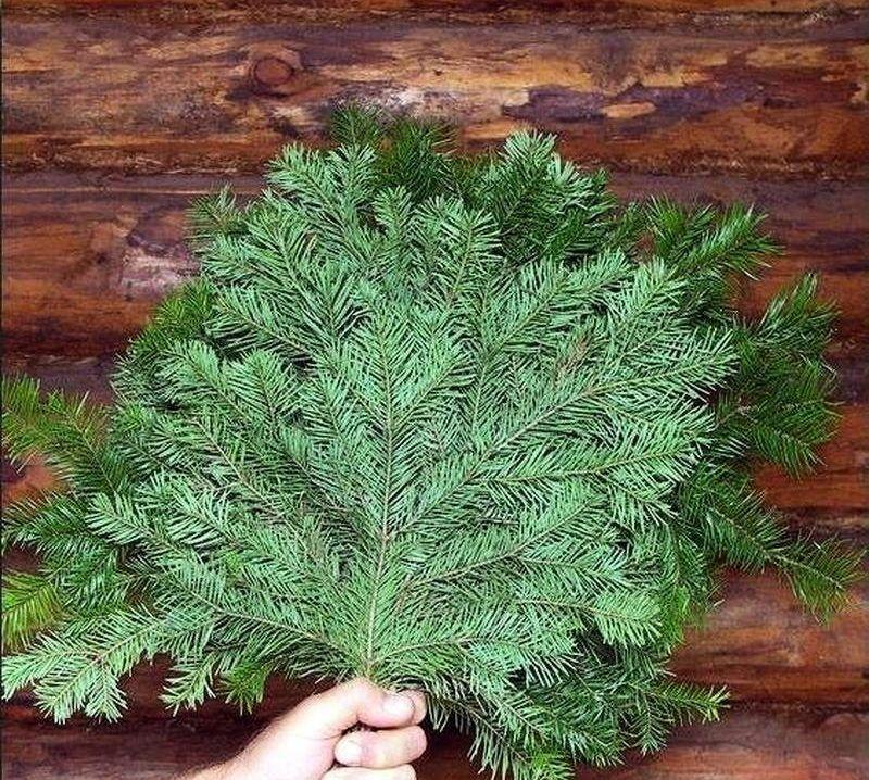 Ветки хвойных деревьев можно заготавливать круглый год