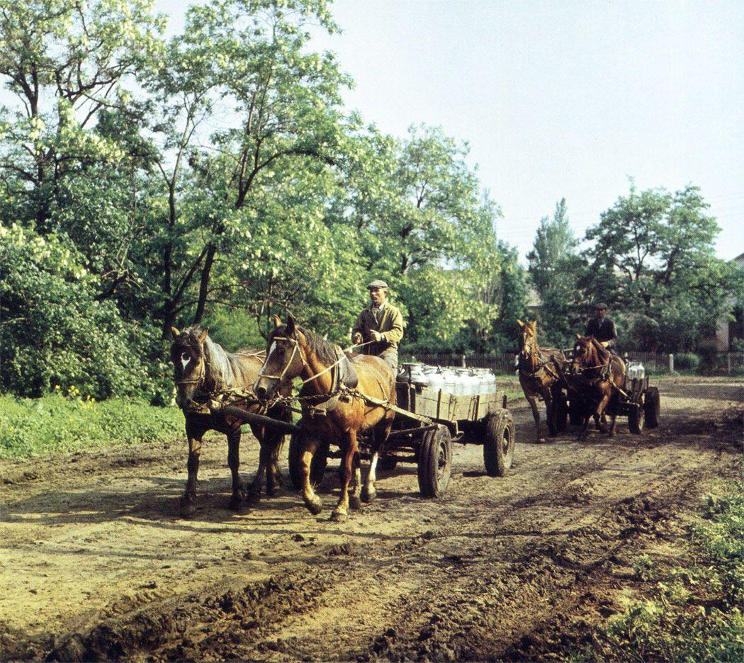 Использование хомутов значительно увеличивало грузоподъемность лошадей