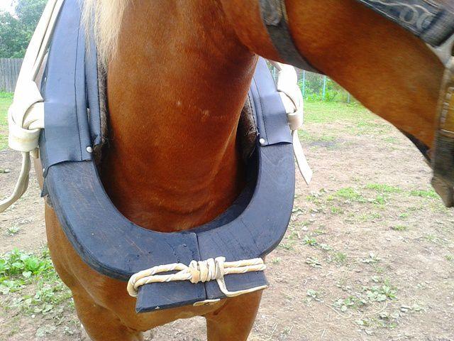 Подбираться хомут должен на каждого коня отдельно, в зависимости от габаритов