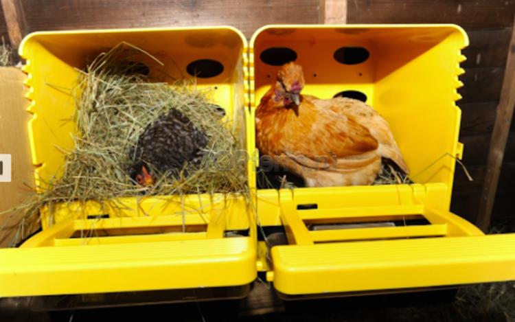 Гнездо представляет собой емкость с подстилкой