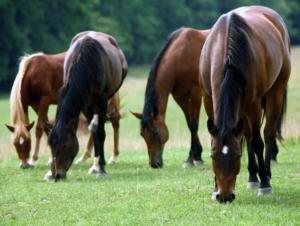 Чем питается лошадь