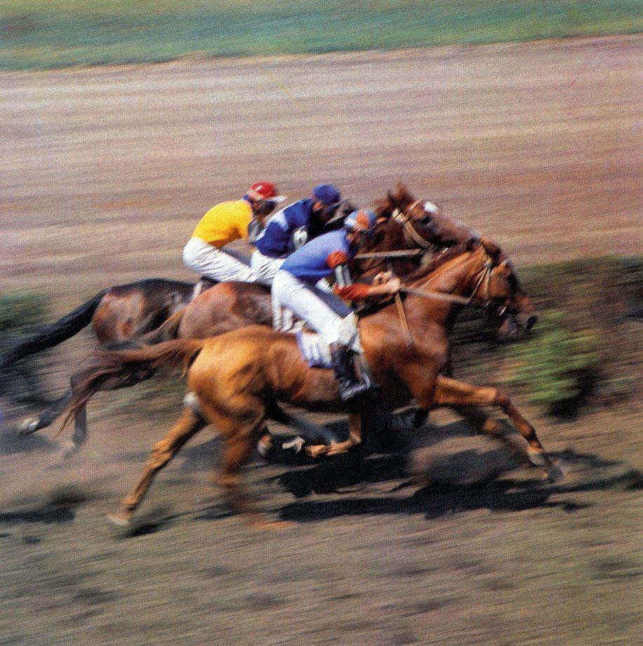Буденновская лошадь - завидный спортсмен на скачках