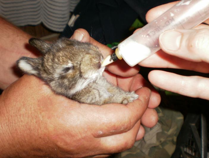 Кроликов, родившихся от матери, больной кокцидиозом, тоже необходимо пропоить Байкоксом