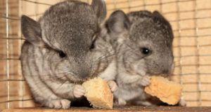 Питание больного животного должно быть калорийным и витаминизированным