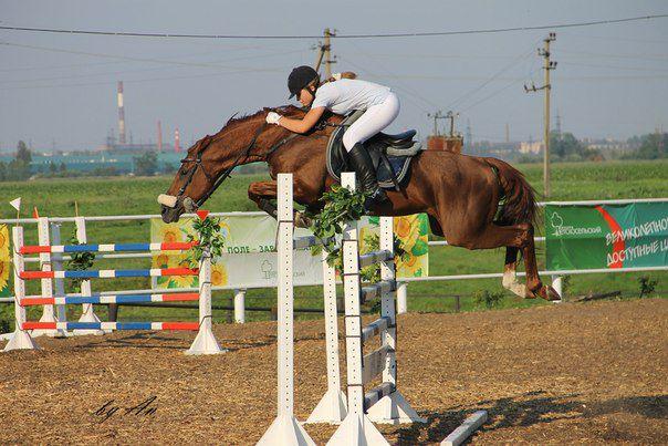 Буденновская лошадь на соревнованиях