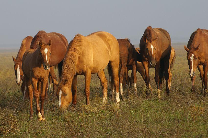 Буденновские лошади за трапезой
