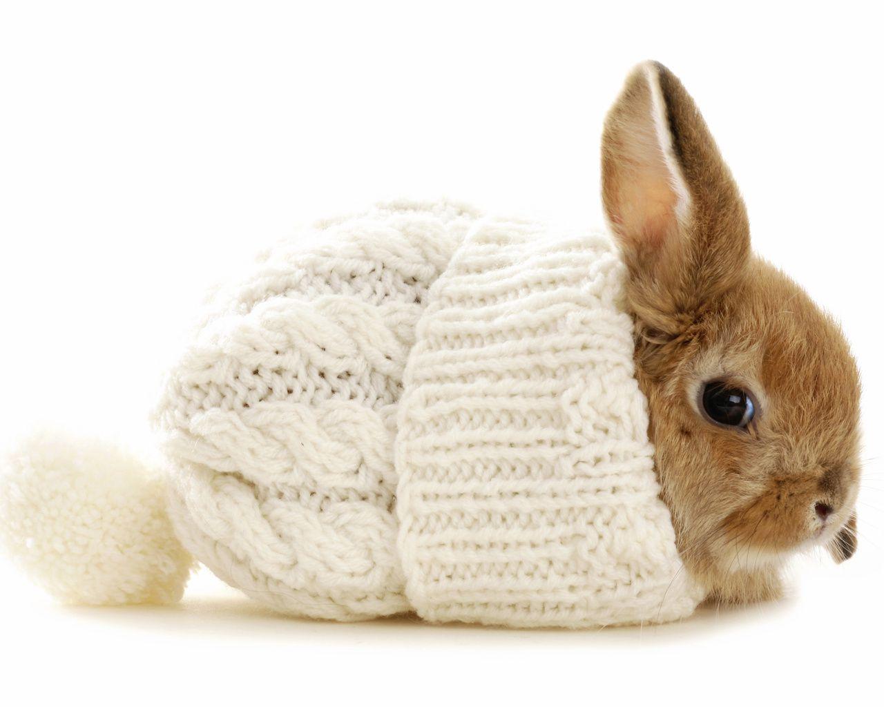 Задача приема Чиктоника - насыщение организма кроликов витаминами