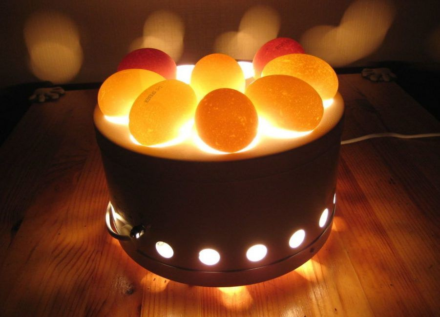 Овоскоп для диагностики яиц
