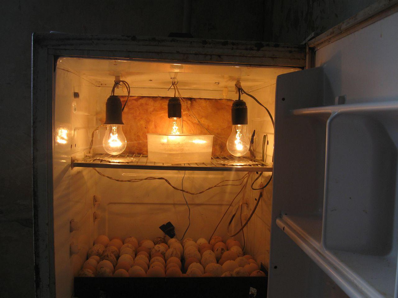 Пример самодельного инкубатора