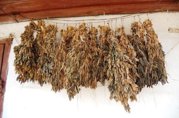 Хранение веточного корма