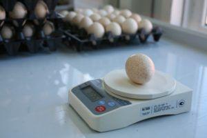 Среднее яйцо индюшки весит около 70 граммов