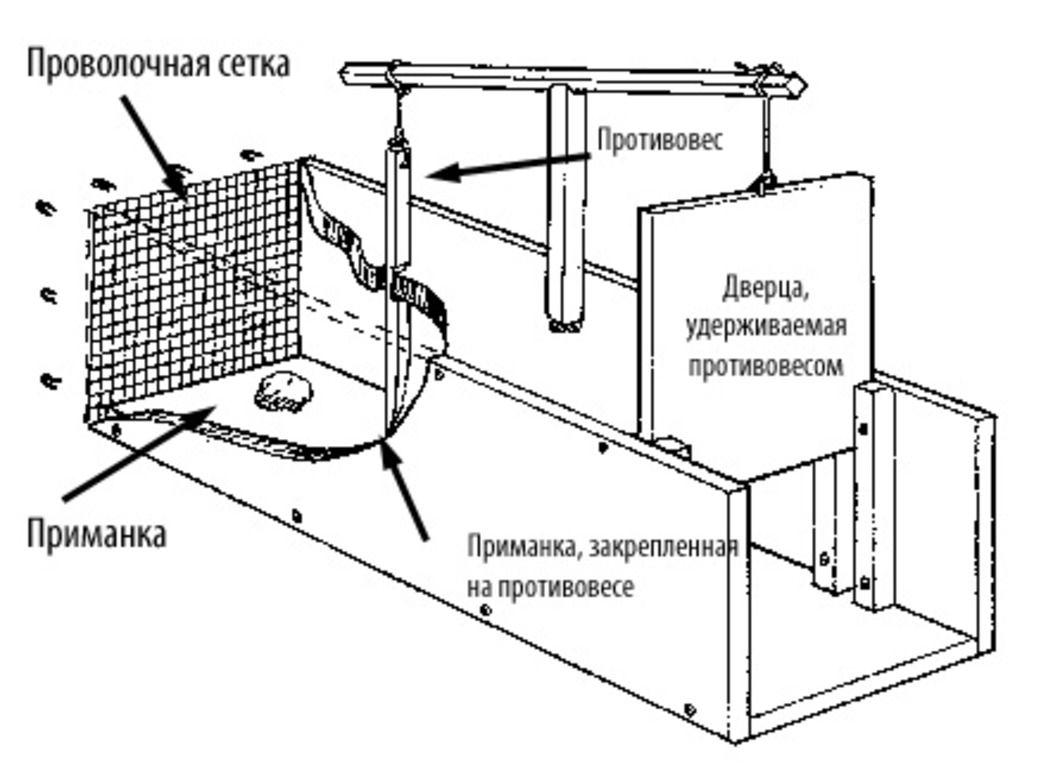 Схема самодельной сеточной ловушки
