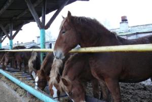 Рацион зависит от специализации лошади