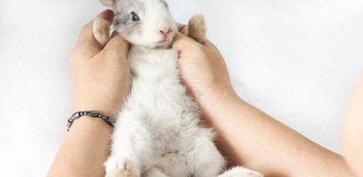 Определить пол грудных крольчат практически невозможно вследствие серьезного сходства во внешнем виде их гениталий