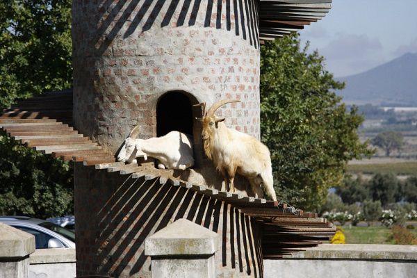 Оригинальный домик для коз