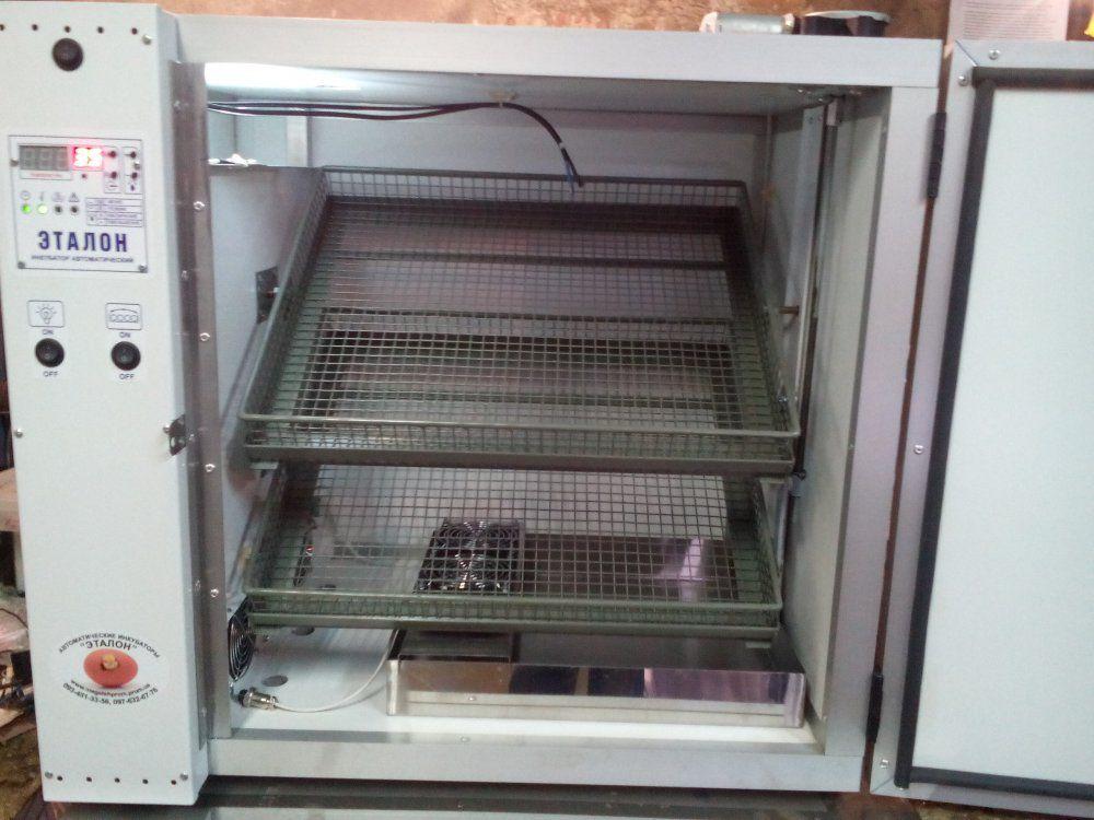 Для разведения гамбургских кур вам потребуется инкубатор