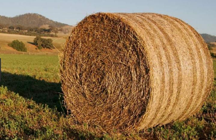 Качественное сено - основа правильного рациона лошади